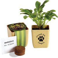 164421390-159 - Flower Pot Set w/Marigold Seeds - thumbnail